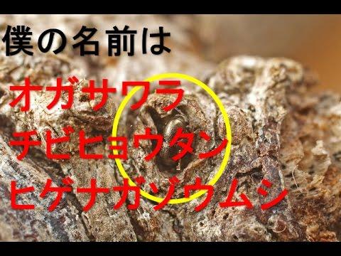 【昆虫】トゲナシトゲトゲ?ややこしい名前の虫たち【名付け】 – 長さ: 9:22。