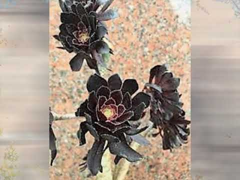 黒い花びら(水原弘)~ZENZI – 長さ: 2:44。