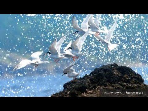 【南日本新聞デジタルボード クイズ動画】ベニアジサシ – 長さ: 1:01。
